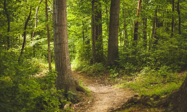 cropped-Forest-Path